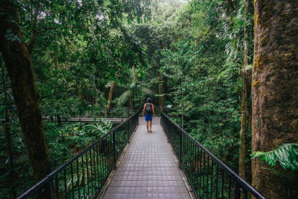 Elevated walkways Mossman Gorge